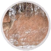 A White-tailed Deer In A Snow Storm Round Beach Towel