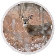 A White-tailed Deer In The Snow Round Beach Towel
