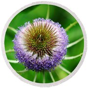 A Wild And Prickly Teasel Round Beach Towel