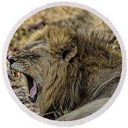 A Yawning Lion Round Beach Towel