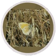 A Yellow Moth  Round Beach Towel