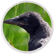 A Young Crow Round Beach Towel