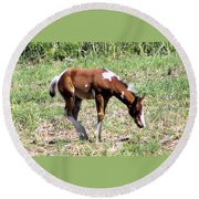 A Young Painted Colt  Round Beach Towel