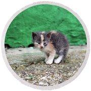 Abandoned Kitten On The Street Round Beach Towel