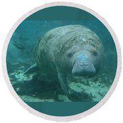 About To Meet A Manatee Round Beach Towel