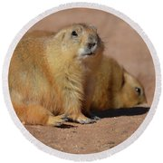Absolutely Adorable Prairie Dog With  A Friend Round Beach Towel