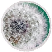 Abstract Dandy Lion - Teal Round Beach Towel