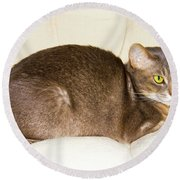 Abyssinian Cat On Chair Pillow, Symbol Of Comfort Round Beach Towel