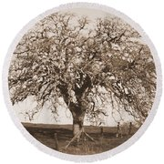 Acacia Tree In Sepia Round Beach Towel