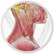 Accessory Nerve View Showing Neck Round Beach Towel