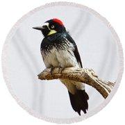 Acorn Woodpecker Round Beach Towel