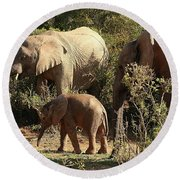 Addo Elephant Family Round Beach Towel