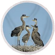 Adolescent Great Blue Herons Round Beach Towel