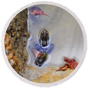 Adopted Amphibian Round Beach Towel