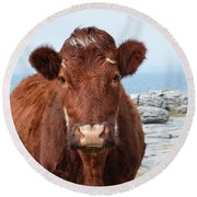 Adorable Brown Cow Standing On The Burren Round Beach Towel