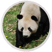 Adorable Face Of A Black And White Giant Panda Bear Round Beach Towel