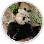 Adorable Giant Panda Bear Eating Bamboo Shoots Round Beach Towel