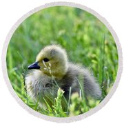 Adorable Goose Chick Round Beach Towel
