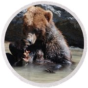Adorable Grizzly Bear Playing With A Maple Leaf While Sitting In Round Beach Towel