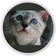 Adorable Kitty  Round Beach Towel