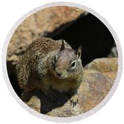 Adorable Up Close Look Into The Face Of A Squirrel Round Beach Towel