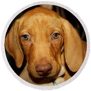 Adorable Vizsla Puppy Round Beach Towel
