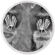 Adult Male Mandrills Black And White Version Round Beach Towel