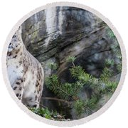 Adult Snow Leopard Standing On Rocky Ledge Round Beach Towel