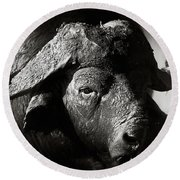 African Buffalo Bull Close-up Round Beach Towel