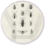 African Bugs And Insects Round Beach Towel by W Wagenschieber