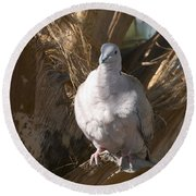 African Collared Dove 3 Round Beach Towel