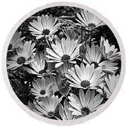 African Daisies In Black And White Round Beach Towel
