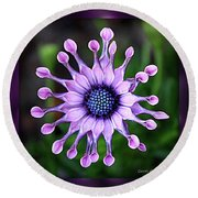 African Daisy - Hdr Round Beach Towel