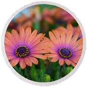 African Daisy Twins Round Beach Towel