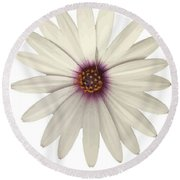 African Daisy With White Petals Round Beach Towel