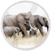 African Elephant Group Isolated Round Beach Towel