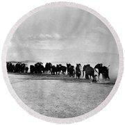 African Elephant Herd Round Beach Towel