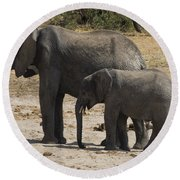 African Elephants Mother And Baby Round Beach Towel