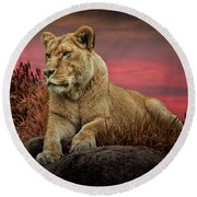 African Female Lion In The Grass At Sunset Round Beach Towel
