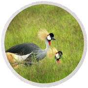 African Gray Crown Crane Round Beach Towel