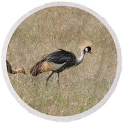 African Grey Crown Crane Round Beach Towel