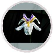 African Iris Raindrops Round Beach Towel