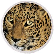 African Leopard Panthera Pardus Captive Wildlife Rescue Round Beach Towel