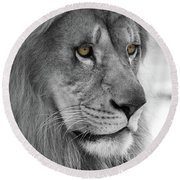 African Lion #8 Black And White  T O C Round Beach Towel