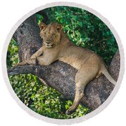 African Lion Panthera Leo On Tree, Lake Round Beach Towel