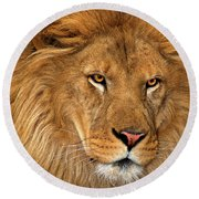 African Lion Panthera Leo Wildlife Rescue Round Beach Towel