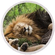 African Lion Sleeping In Serengeti Round Beach Towel