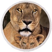 African Lions Parenthood Wildlife Rescue Round Beach Towel