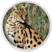 African Serval In Ngorongoro Conservation Area Round Beach Towel