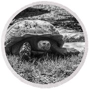 African Spurred Tortoise Round Beach Towel